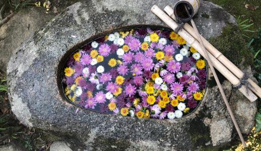 今週の植物(お花)4