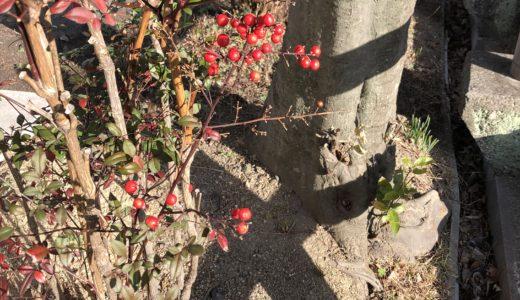 今週の植物(お花)9