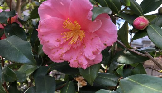 今週の植物(お花)10