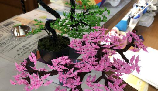 今週の植物(お花)11