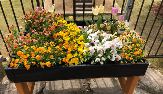 今週の植物(お花)16