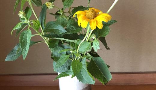 今週の植物25