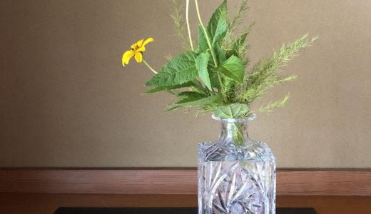 今週の植物28