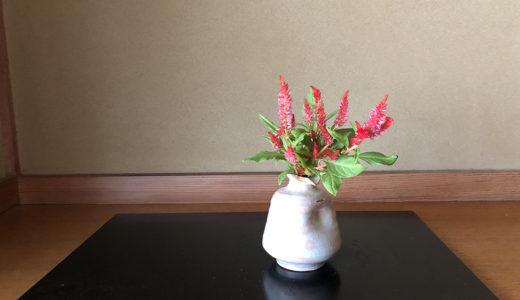 今週の植物33