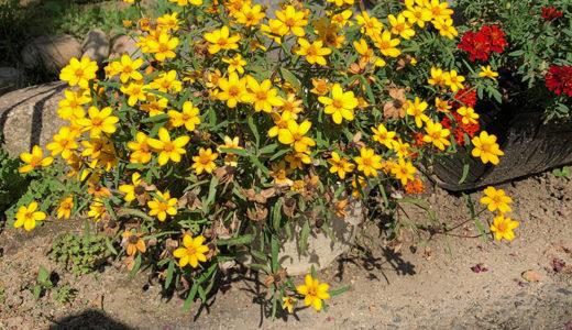 今週の植物36