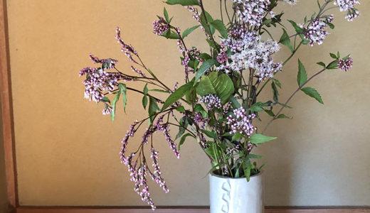 今週の植物37