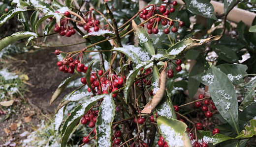 今週の植物48