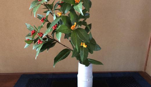 今週の植物49