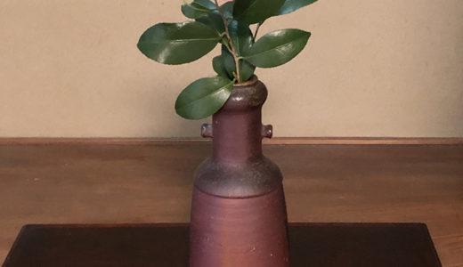 今週の植物55