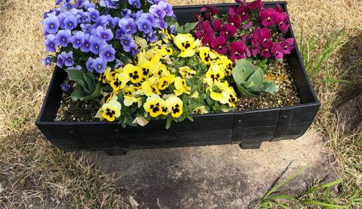 今週の植物56
