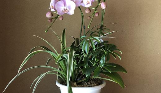 今週の植物61