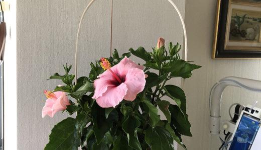 今週の植物68
