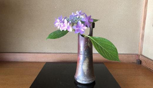 今週の植物67