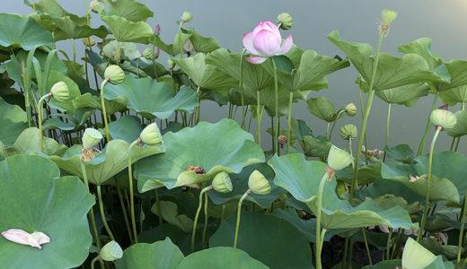 今週の植物73